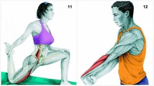 Stretchövningar: Halft knäböjd hukning framåt / Stretch av höftböjarmuskeln & Underarmsstretch